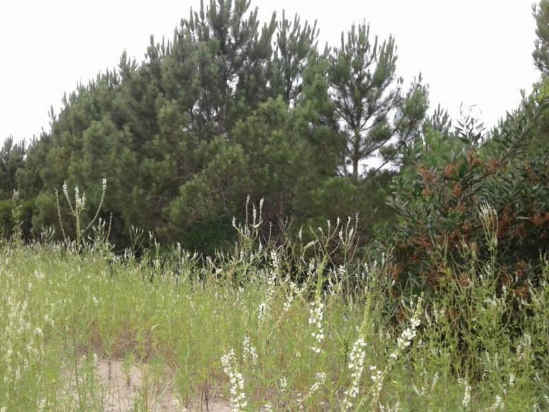 2 terrenos juntos en venta en el golf de costa esmeralda