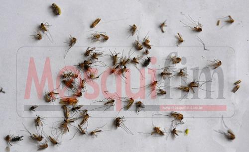 2 ud. mata mosquito mosquifim mf60 dengue, pernilongo, zika