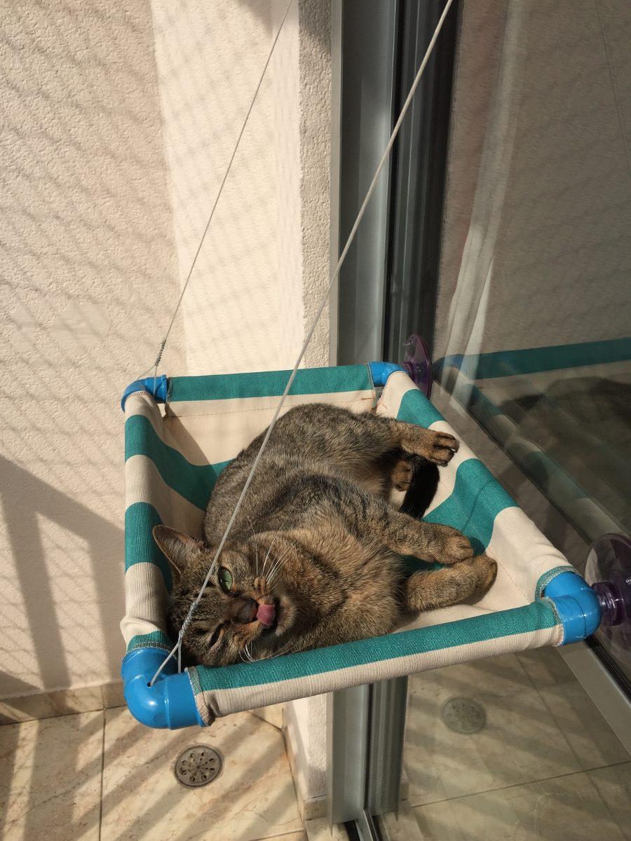 2 unid cama gato caminha pet ventosas para janelas mimax for Cama para gatos