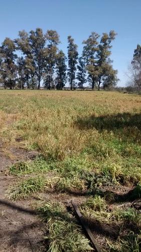 20 hectáreas en marcos paz
