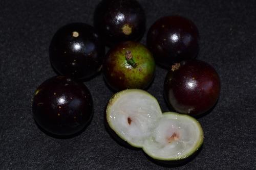 20 sementes de jabuticaba olho de boi