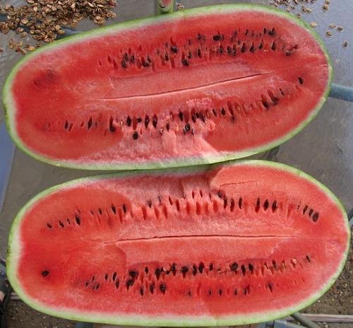 20 sementes de melancia gigante frete grátis