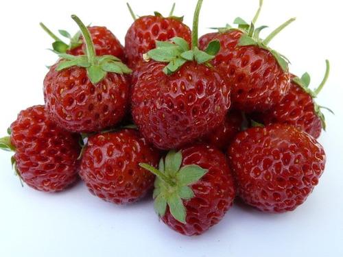 20 sementes de morango ¿framberry¿  framboesa