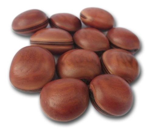 20 sementes de olho de boi natural sem furo mucunã