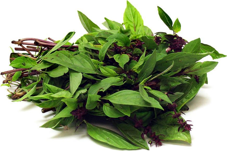 Semillas de albahaca tailandesa Paquete de 500 semillas Ocimum basilicum