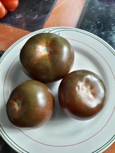 20 semillas de tomate negro kumato, híbrido,no transgenico,