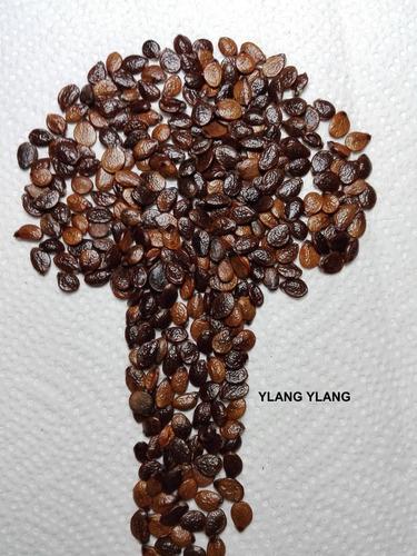20 semillas de ylang ylang perfume chanel #5 cananga odorata