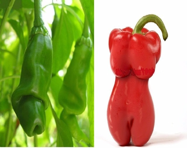 200 semillas chile sexy hombre y chile sexy mujer 100 for Plantas de exterior chile