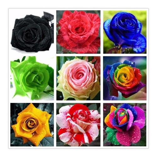 200 semillas de rosas exoticas colores  variados negro, azul