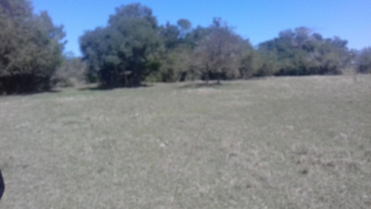 2000 hapròx arbolit cerro largo / ganadero casco corral baño
