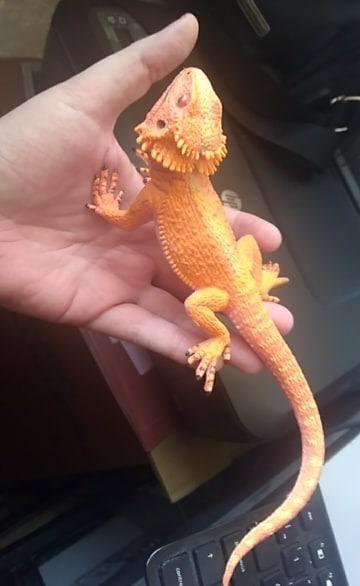 8232e27e8b9 2012 Safari Ltd Incredible Creatures Bearded Dragon 21 Cms