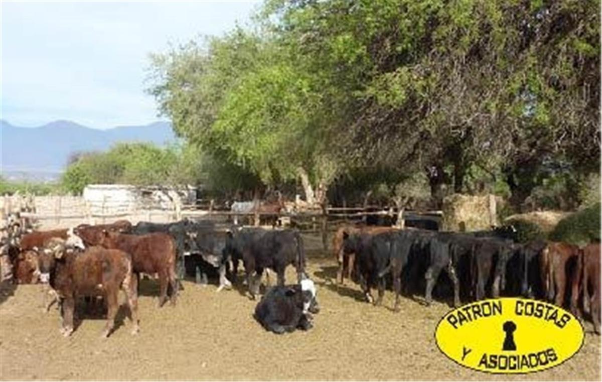 2071hp 100 has finca c/riego y hosteria. valles calchaquies
