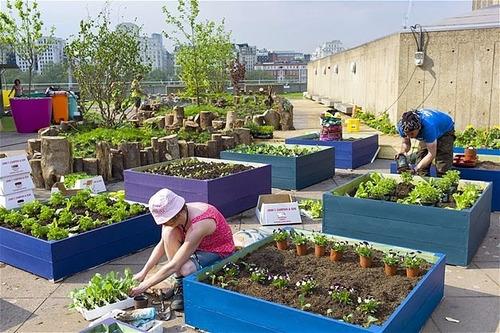 220 semillas de chile poblano hortaliza 962 envío gratis