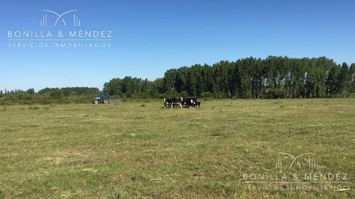 224 hectáreas de excelente campo, 40 has papero, 70 has monte nativo!!