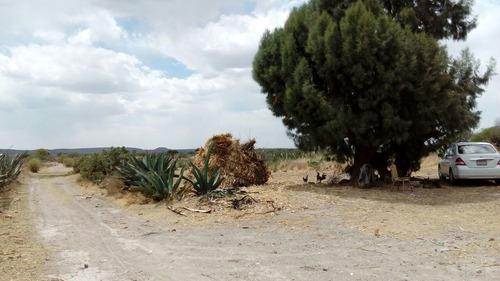243 hectáreas en la concepción, loreto; zac. cuenta con 2 manantiales.