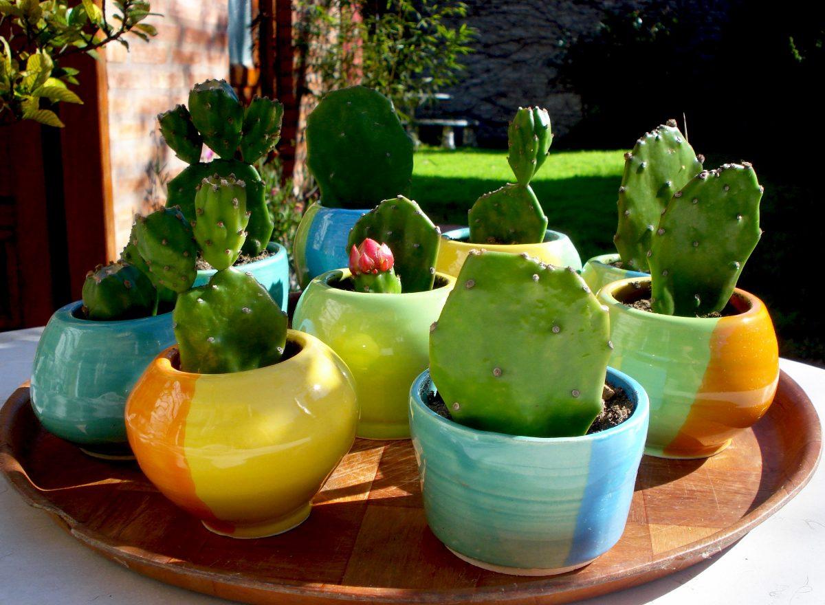 mini macetas x mayor ceramica souvenir cactus suculenta