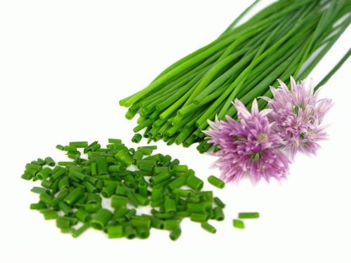 25 sementes de cebolinha francesa - allium schoenoprasum