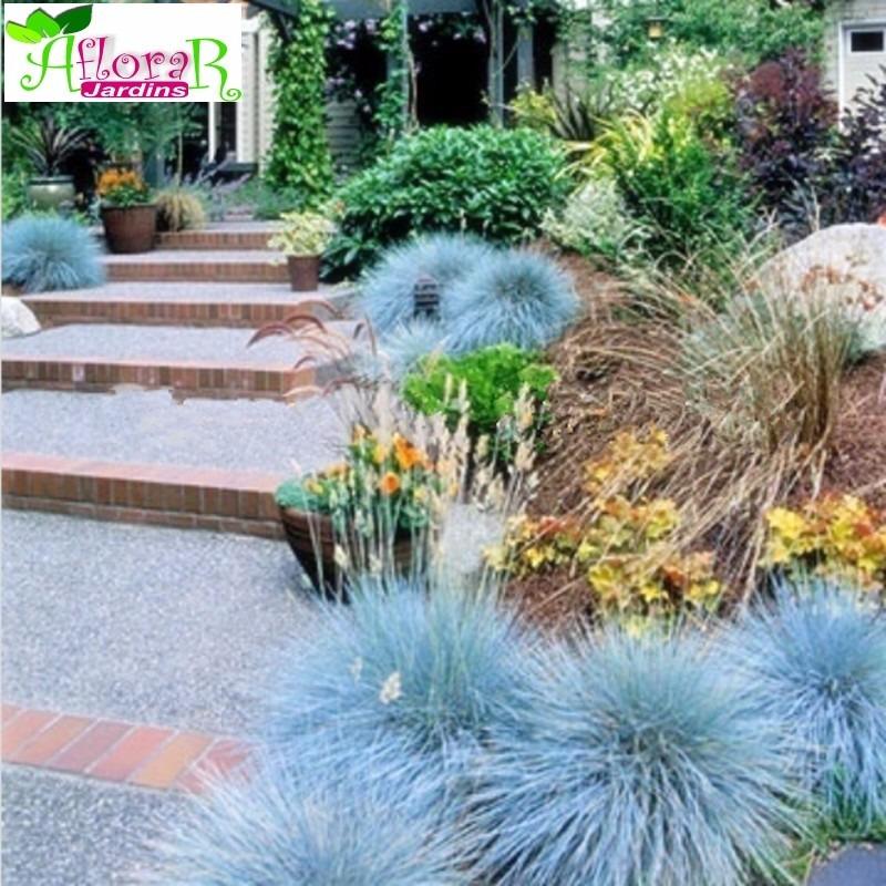25 sementes grama azul 100 folheto como plantar r. Black Bedroom Furniture Sets. Home Design Ideas