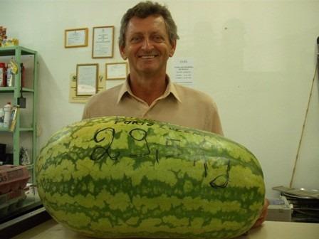 25 sementes melancia gigante do congo semente frete gratis