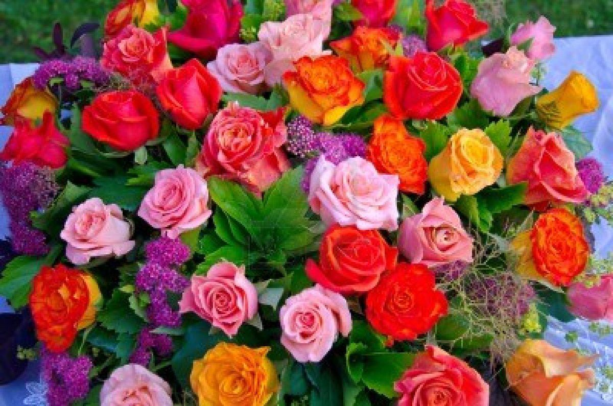 25 Semillas Rosas En Mezcla De Colores, Rosales Flores C