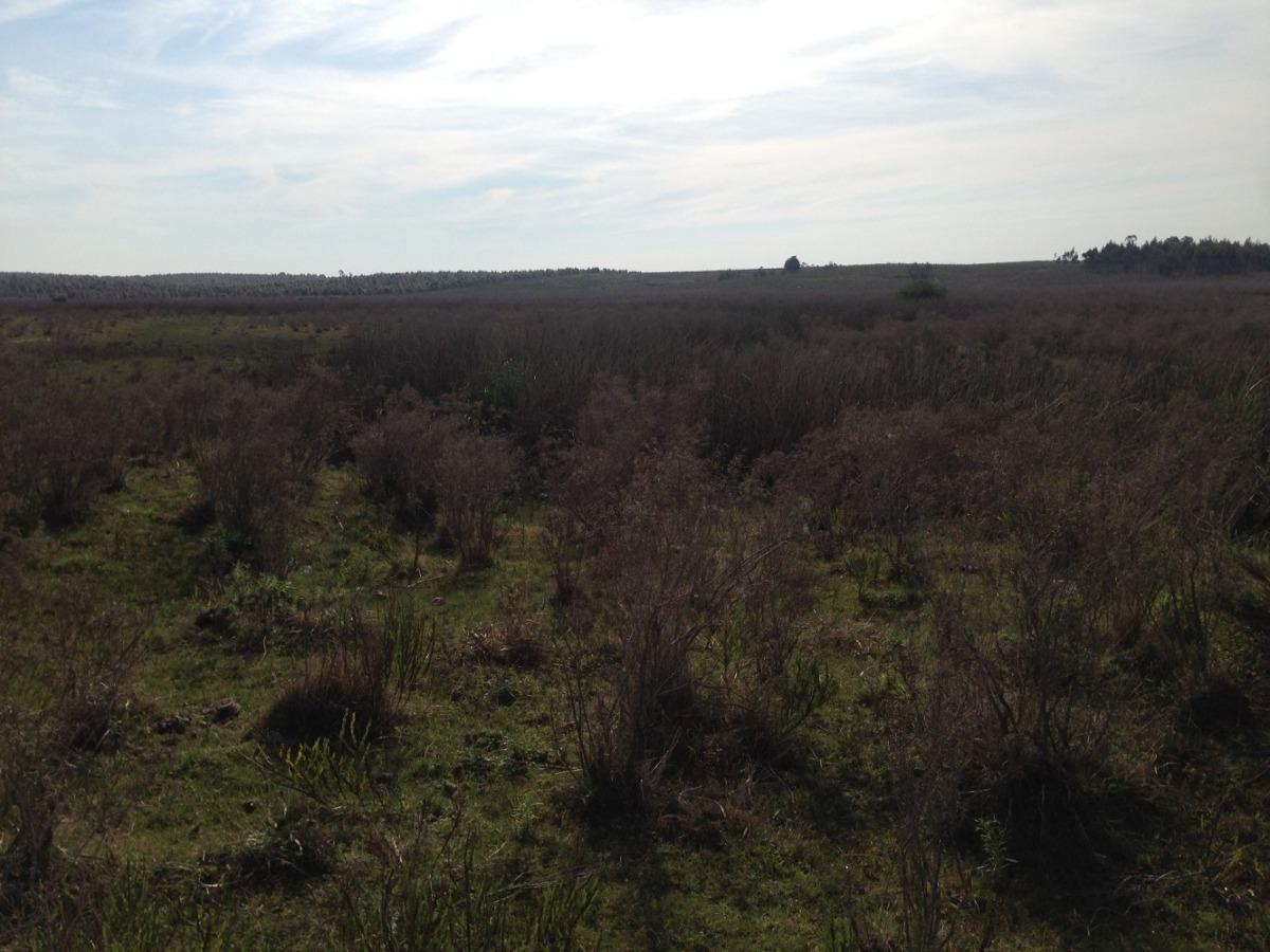 26 hectáreas con cañada
