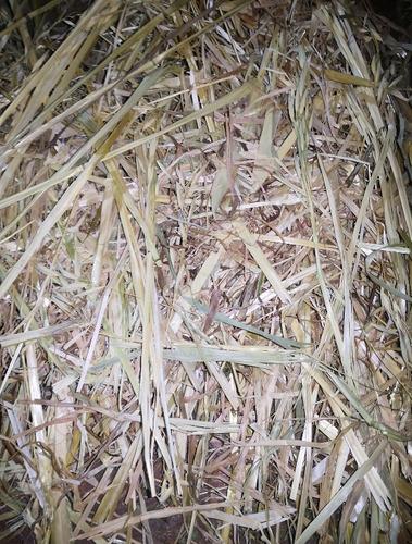 2kg de heno de avena orgánica para cuyo