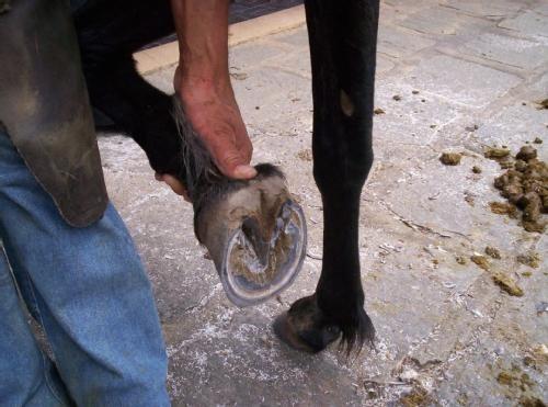 3 dvd´s cavalos - monty roberts + redeas + casqueamento e1
