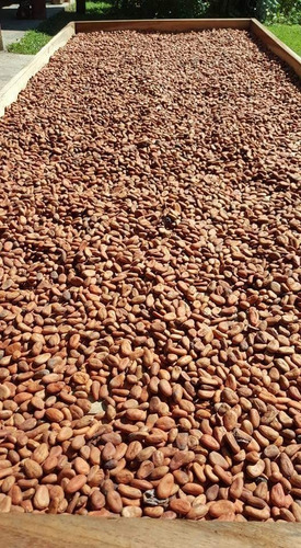 3 kg cacao deshidratado en polvo orgánico envío gratis