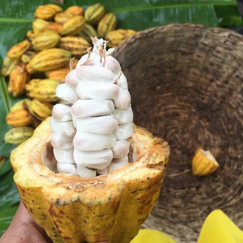 3 kg cacao en polvo alcalino orgánico envío gratis
