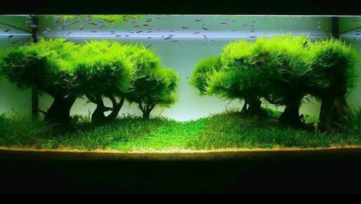 Plantar Musgo. Finest With Plantar Musgo. Rvore Grama Plantar Musgo ...
