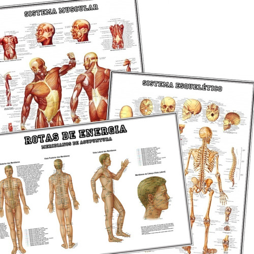 3 posters 65x100cm anat. músculos esqueleto rotas de energia