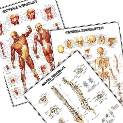3 posters anatomia 65cmx100cm muscular esquelético coluna