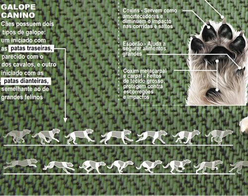 3 posters medicina veterinária 65x100cm corpo do cachorro