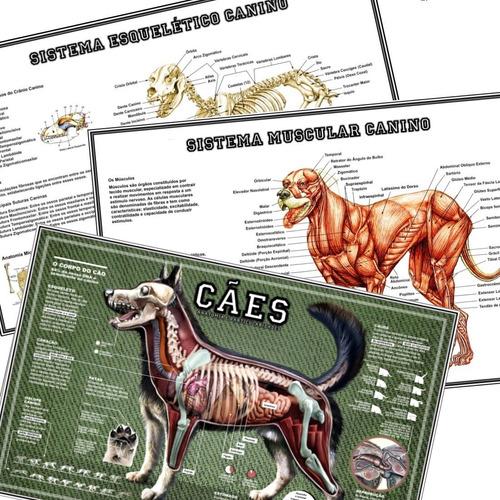 3 posters veterinária 65x100cm anatomia dos cães p/ petshop