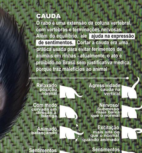 3 posters veterinária 65x100cm corpo do cachorro -- medicina