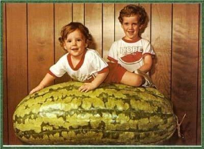 30 sementes carolina cross melancia guinness 100 kg p. mudas
