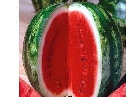 30 sementes de melancia crimson sweet frete grátis