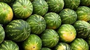 30 sementes de melancia crimson swett + frete grati
