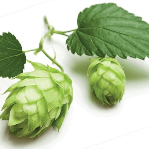 30 semillas orgánicas de lúpulo  para hacer cerveza!!!!!!