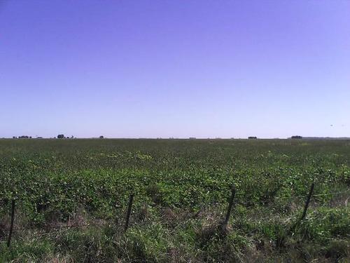 300 has agrícolas en daireaux