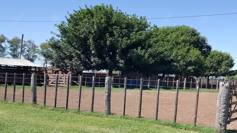 300 has campo en venta - feed lot