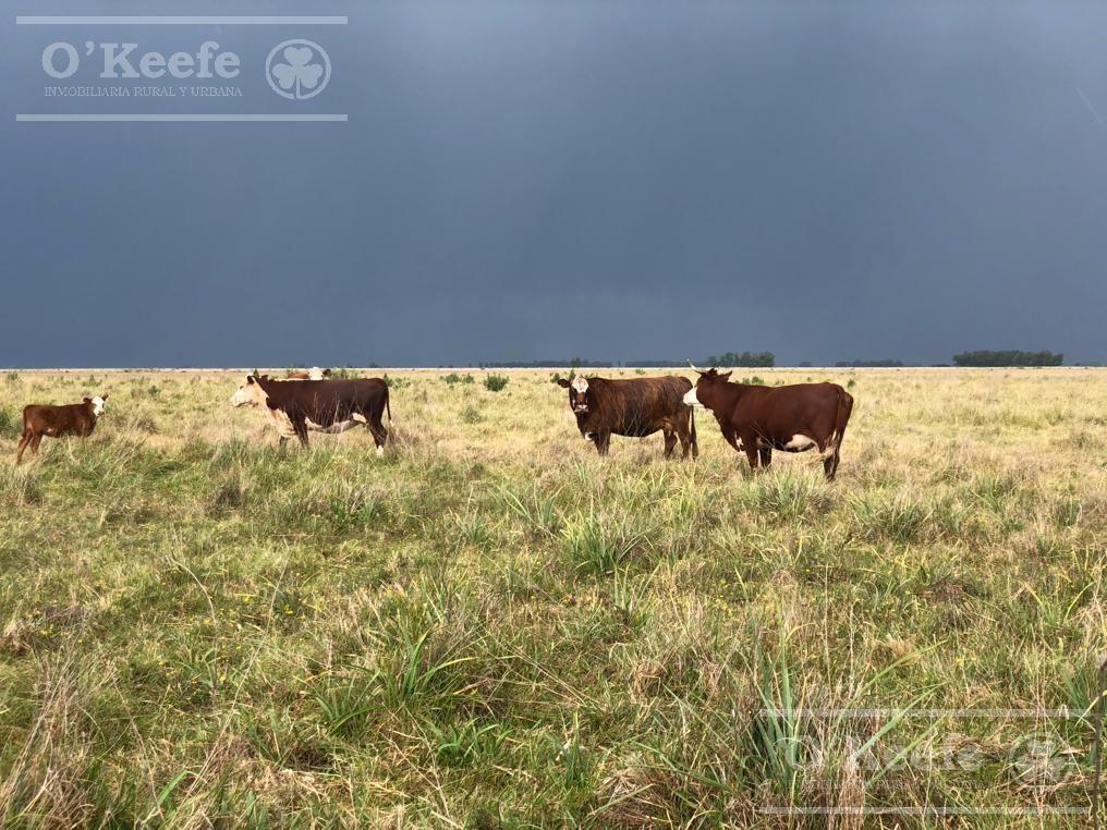 300 has en bolivar. oportunidad de campo 60 % agrícola!