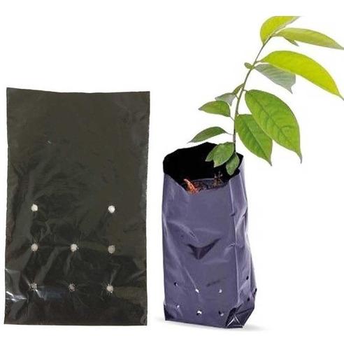 300 sementes de ipê + saquinhos para plantio