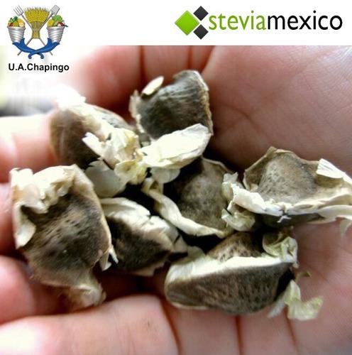 3,000 semillas de moringa organica --envío gratis--