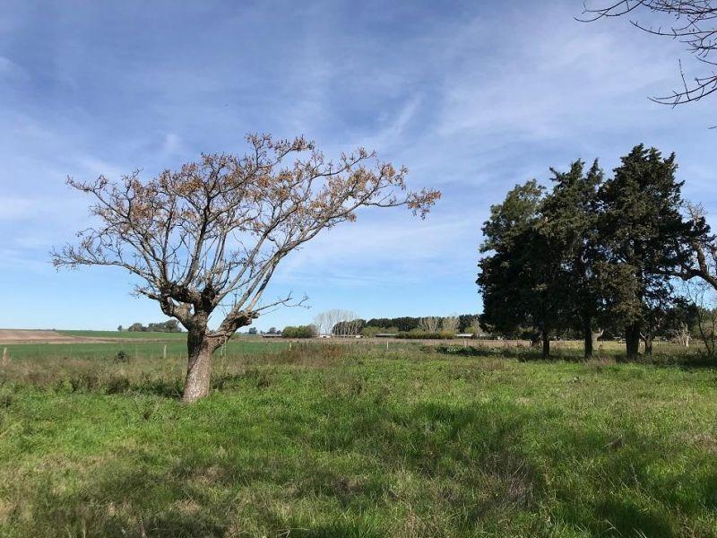 31 hectáreas   campo   ruta prov. n 41 317