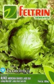 345 células espuma fenólica p/ germinação de sementes mudas
