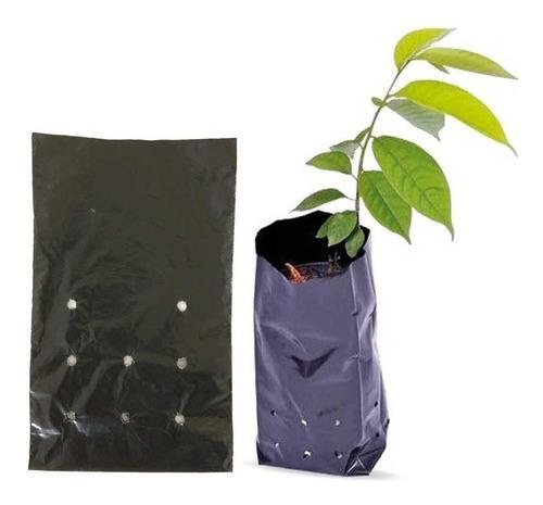 350 sementes de ipê jacarandá + flamboyant  + 25 sacos