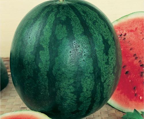 36 sementes de melancia sugar baby - frete grátis - ferrazmg