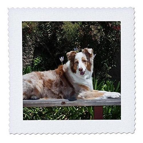 3drose qs_88760_10 perro pastor australiano us05 zmu0027