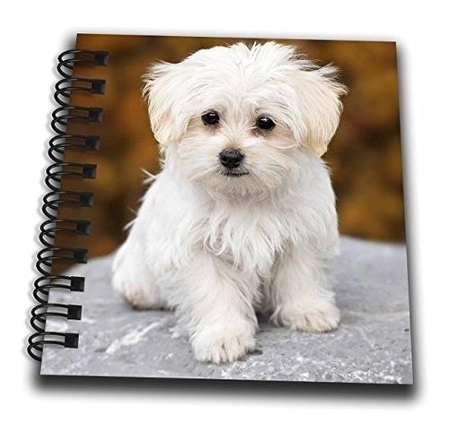 3drose rinapiro  perros  maltés lindo perrito  libro de dib